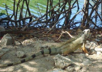 reserva-de-iguanas-rodadero